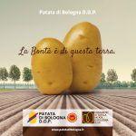 Patata di Bologna D.O.P., la bontà è di questa terra!