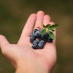 Il mirtillo, una forza della natura per il nostro benessere