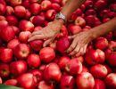 GALA BIO VAL VENOSTA, una mela in armonia con la natura