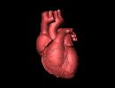 Asma cardiaco: cause, sintomi iniziali, esami, linee guida e cure
